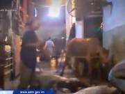 Video An ninh - Úc tạm ngưng xuất bò sống sang Việt Nam