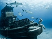 Thế giới - Người đẹp mạo hiểm một mình lặn giữa bầy cá mập