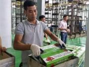 Thị trường - Tiêu dùng - Lô vải thiều đầu tiên chiếu xạ tại Hà Nội xuất đi Úc