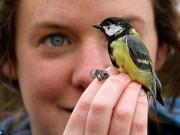 """Thế giới - Căng thẳng, chim ở thành phố """"chết trẻ"""" hơn chim quê"""