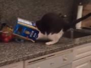 """Video Clip Cười - Video clip: """"Phát điên"""" với chú mèo tai quái"""