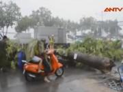 Video An ninh - TP.HCM: Cây xanh bật gốc đè người đi đường