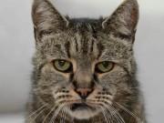 """Phi thường - kỳ quặc - Cụ mèo già nhất thế giới """"141 tuổi"""""""