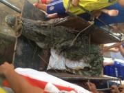 Tin tức trong ngày - Bắt được cá sấu hơn 70kg ở hồ câu nổi tiếng Hà Nội