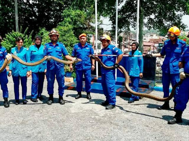 Thái Lan: Kinh hãi hổ mang chúa khổng lồ 5 mét mò vào nhà dân - 5