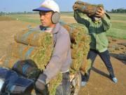 Thị trường - Tiêu dùng - Nghề lạ: Thực hư chuyện trồng cỏ kiếm bộn tiền ở Điền Xá