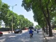 Chặt 1.300 cây xanh: Sở Xây dựng Hà Nội nói gì?