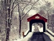 Lý giải bí ẩn rợn người về cây cầu than khóc trong đêm