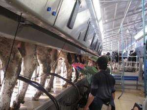 Thị trường - Tiêu dùng - Có doanh nghiệp đầu tư 1 tỷ USD vào chăn nuôi
