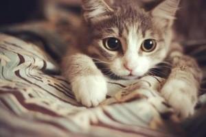 """Phi thường - kỳ quặc - Video: Kiểu đi vệ sinh """"bá đạo"""" của chú mèo"""