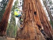Thể thao - Sửng sốt tay đua xe đạp giữ thăng bằng trên thân cây