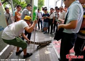 Tài chính - Bất động sản - Lạ kỳ công ty tuyển nhân viên dám hôn cá sấu trên phố