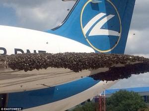 Tin tức trong ngày - Nga: Máy bay chở khách bị hàng nghìn con ong tấn công