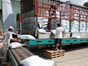 """Thị trường - Tiêu dùng - Xuất khẩu gạo sang TQ như """"đánh bạc"""""""