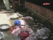 Thị trường - Tiêu dùng - Hãi hùng lò giết mổ lợn trên nền cống rãnh