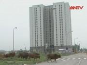 Video An ninh - HN làm rõ trách nhiệm, truy thu tiền bán nhà tái định cư