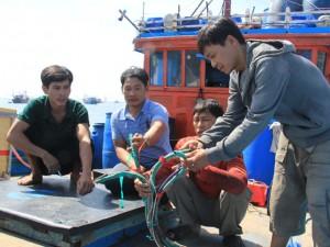 Tin tức trong ngày - Tàu cá Việt Nam bị tàu TQ đâm chìm tại Hoàng Sa