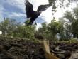 Ngắm chim trên đảo hoang giữa Ấn Độ Dương