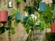 Lạ mắt, vườn cây treo ngược trong lòng Thủ đô