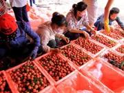 Xuất nhập khẩu - Xây khu trung chuyển xuất khẩu sang Trung Quốc
