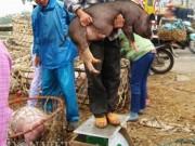 Giá cả - Mưu sinh bằng nghề... bế lợn