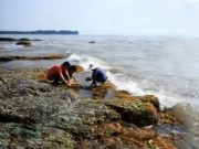 Du lịch - Về biển Cửa Tùng thưởng thức bánh rong biển Quảng Trị