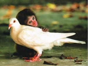Phi thường - kỳ quặc - Những tình bạn ngang trái nhưng đầy cảm động của động vật