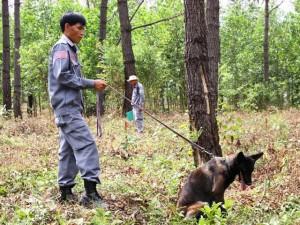 Tin tức Việt Nam - Lần đầu tiên ở Việt Nam: Chó đi rà bom, mìn