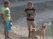 An ninh Xã hội - Camera giấu kín: Lưu ý khi đi dạo với thú cưng