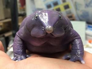 Chuyện lạ - 18 loài ếch kỳ dị hiếm gặp trên thế giới