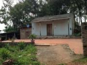 An ninh Xã hội - Đang ngủ trưa, một phụ nữ bị hàng xóm vào nhà làm nhục