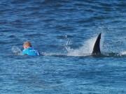 Thể thao - Các VĐV thoát chết thần kỳ khi đụng cá mập