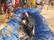 Tin tức trong ngày - Cá voi hơn 300 kg dạt vào bờ biển Quảng Nam