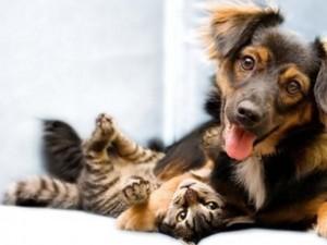 Phi thường - kỳ quặc - Tây Ban Nha: Công nhận chó, mèo là công dân
