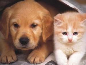 Tin tức trong ngày - Những nơi chó mèo được đối xử bình đẳng như con người