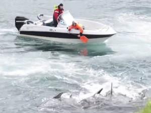 Tin tức trong ngày - Úc: Con gái bàng hoàng nhìn bố bị cá mập cắn chết