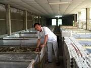Xuất nhập khẩu - Nuôi côn trùng xuất khẩu