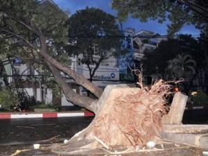 Tin tức trong ngày - TP.HCM: Mưa lốc, hàng loạt cây bật gốc, ngã đổ