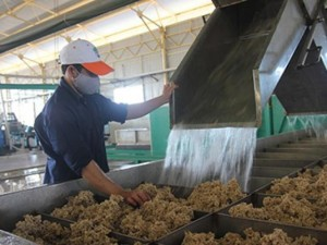Doanh nhân - Vì sao đại gia Việt ra nước ngoài làm nông?