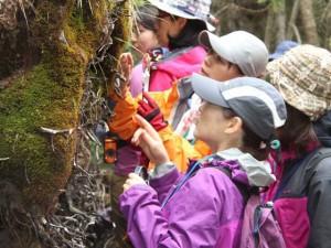 Thế giới - Phụ nữ Nhật rộ mốt ngắm rêu để xả stress
