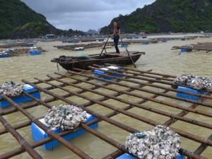 Tin tức trong ngày - Quảng Ninh: Nước mắt ngư phủ hòa vào biển cả
