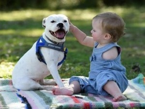 Bạn trẻ - Cuộc sống - Cảm động tình bạn giữa cô bé cụt tay và chú chó ba chân