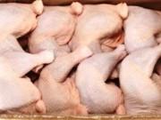 Giá cả - Bản tin tài chính kinh doanh 04/08: Giá thịt gà ở New York