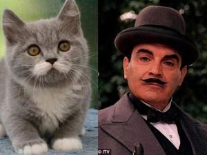 """Phi thường - kỳ quặc - Mèo khuynh đảo thế giới mạng nhờ """"chòm ria"""" giống người"""