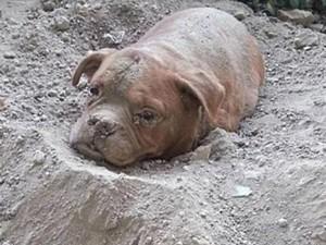 Tin tức trong ngày - Pháp: Chó bị chủ chôn sống khiến dư luận phẫn nộ