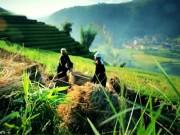 Du lịch - Trải nghiệm nghề nông trên rẻo cao Mù Cang Chải