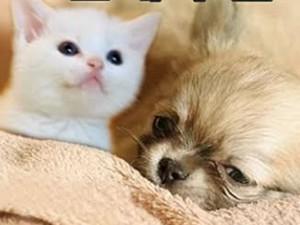 """Phim - Cặp đôi chó, mèo dễ thương gây """"bão"""" truyền hình Hàn"""