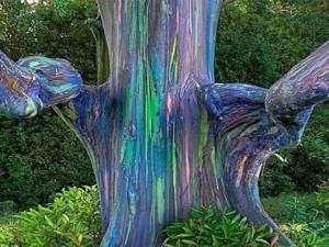 Phi thường - kỳ quặc - 10 hiện tượng tự nhiên kỳ lạ và tuyệt vời nhất thế giới