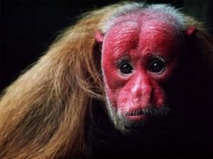 Phi thường - kỳ quặc - Giật mình trước 5 sinh vật có vẻ ngoài kỳ dị