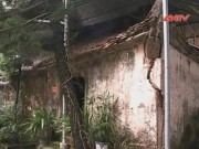Bản tin 113 - Hà Nội: Di tích quốc gia 500 tuổi  đang... cầu cứu!
